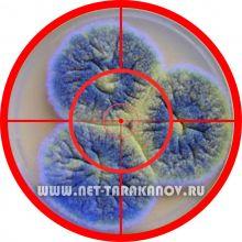 Уничтожение плесени, грибка озоном