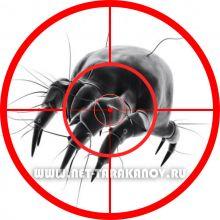 Уничтожение пылевых клещей (сапрофитов)
