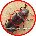 Уничтожение жуков-мукоедов